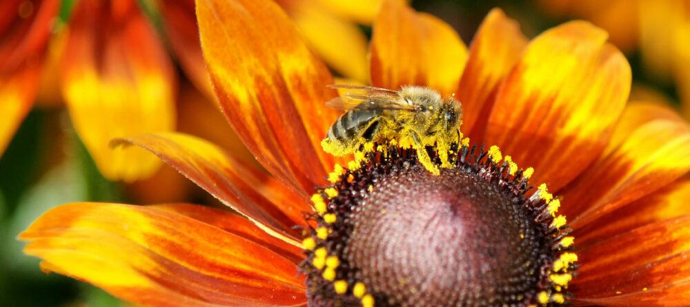 Bienenzuchtverein